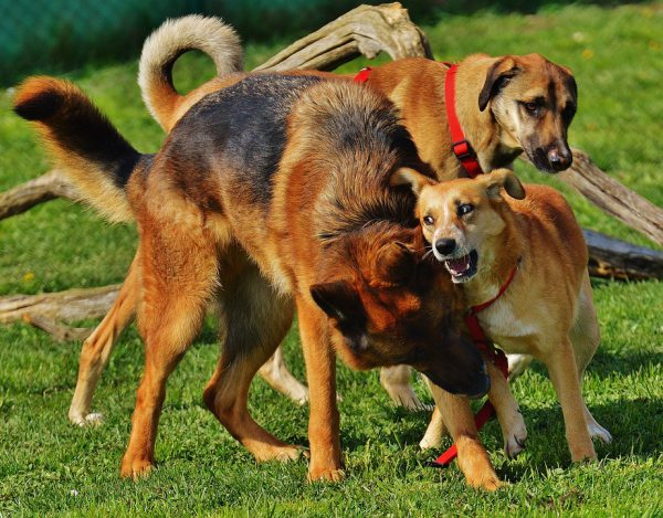 Dog parks can lead to fights | Fitdog Blog