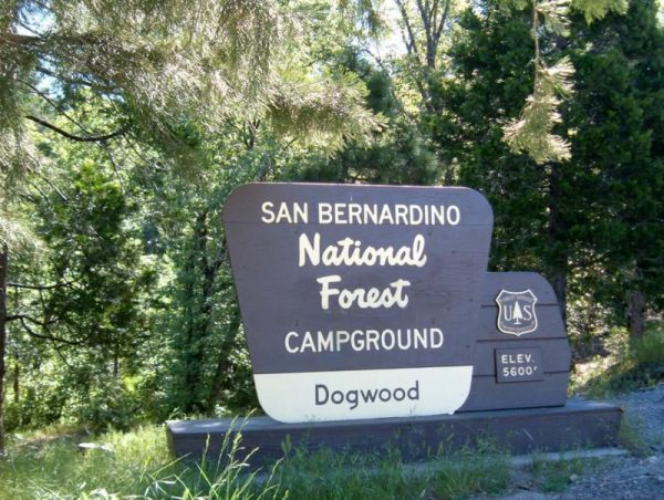 Dog-Friendly Camping Dogwood campground San Bernardino Mountains | Fitdog Blog