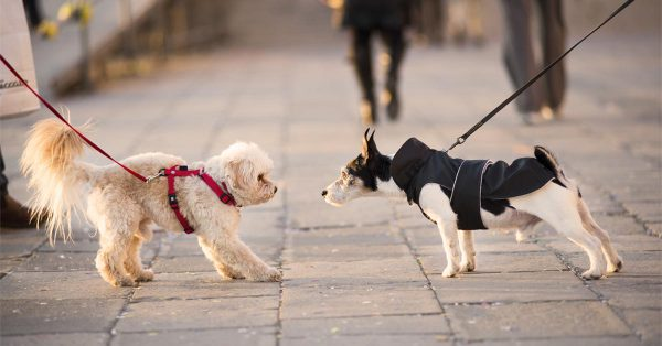 One Leash Greeting | Fitdog Blog
