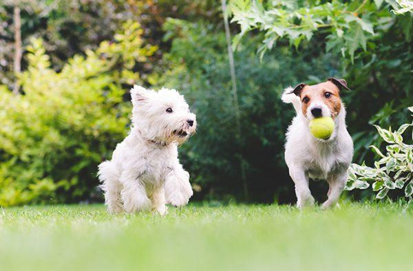 Puppy Playdates | Fitdog Blog