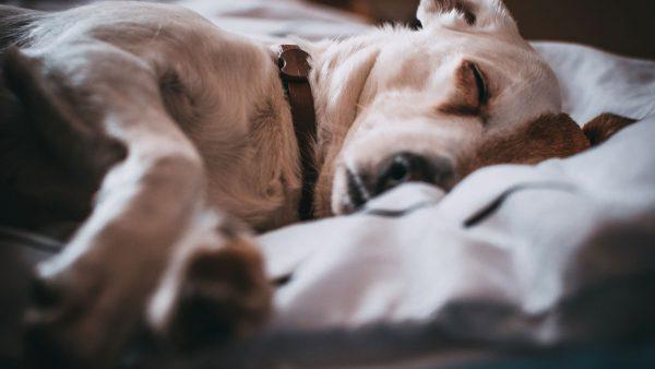 Dog scared of fireworks | Fitdog Blog