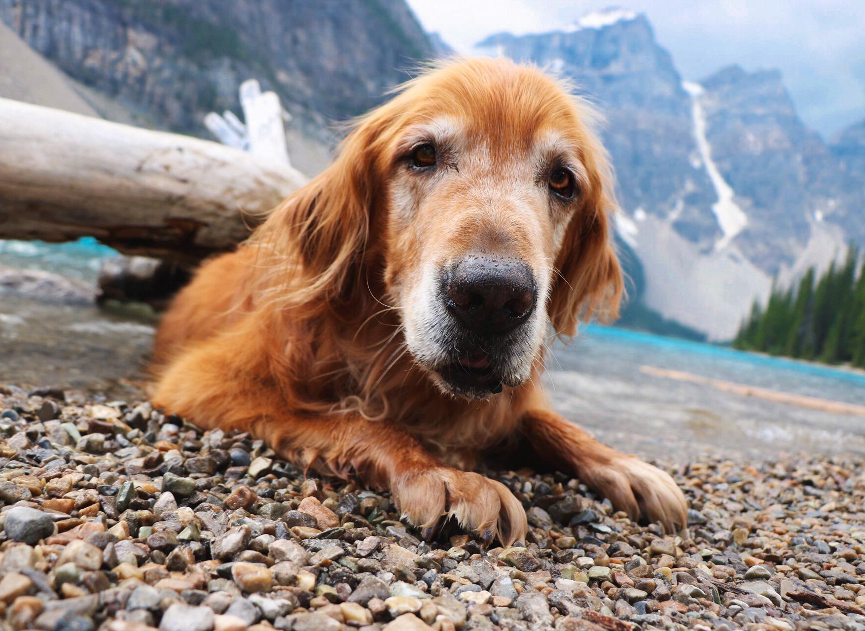 dog eye level