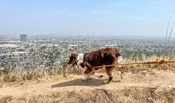 dog Los Angeles